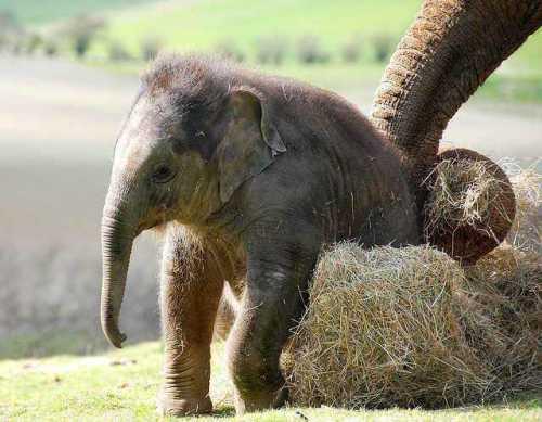 слоненок играет с покрышкой невероятно позитивное видео